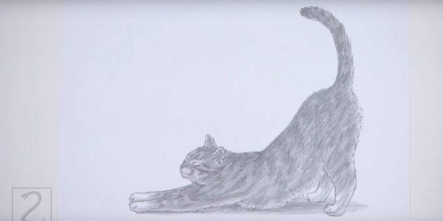 Как нарисовать стоящую кошку в реалистичном стиле