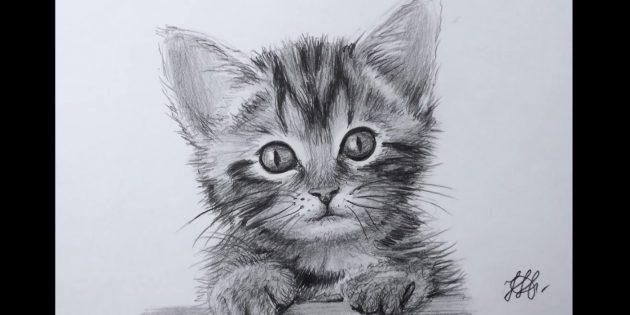 Как нарисовать мордочку кошки в реалистичном стиле