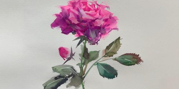 Как нарисовать раскрытую розу красками