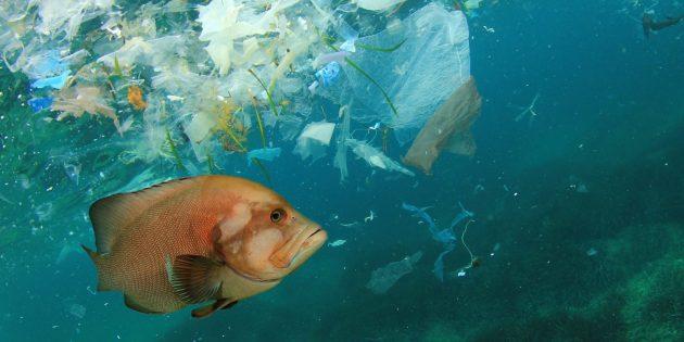 Глобальные проблемы: загрязнение океана