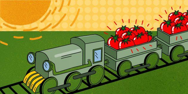 Каждый день с августа по ноябрь «Агропромышленный комплекс Астраханский» перерабатывает 5000тонн помидоров