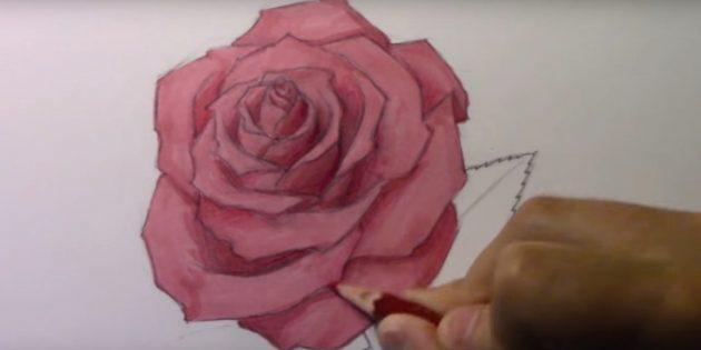 Фломастером или маркером закрасьте лепестки розы