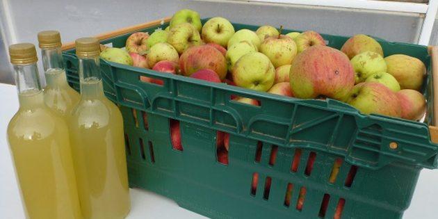 Как приготовить яблочный сидр в домашних условиях: простой рецепт