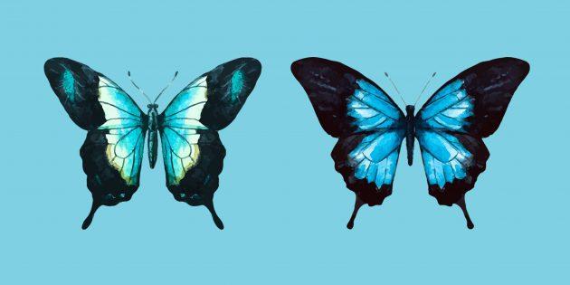 15 способов нарисовать красочную бабочку