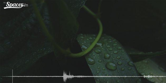 Бинауральные звуки дождя для концентрации