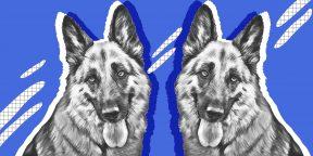 Как нарисовать собаку тем, кто вообще не художник