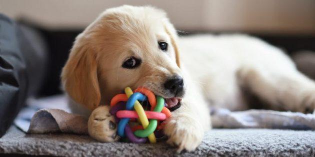 Не забывайте, что игрушки не заменят внимание