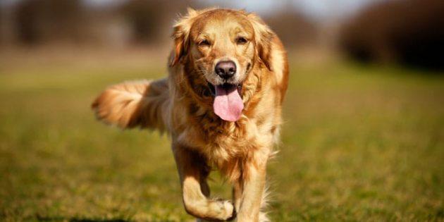 Как воспитать собаку: ко мне