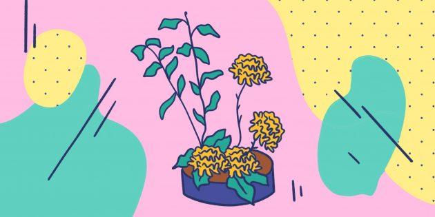 Что такое икебана и как ей научиться