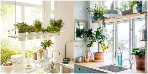 Озелените кухню