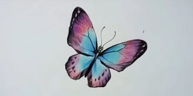 Чёрным цветом обозначьте узор на крыльях