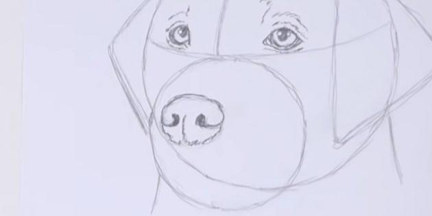 Нарисуйте нос собаки