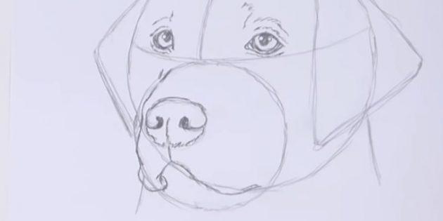Изогнутыми линиями наметьте верхнюю губу