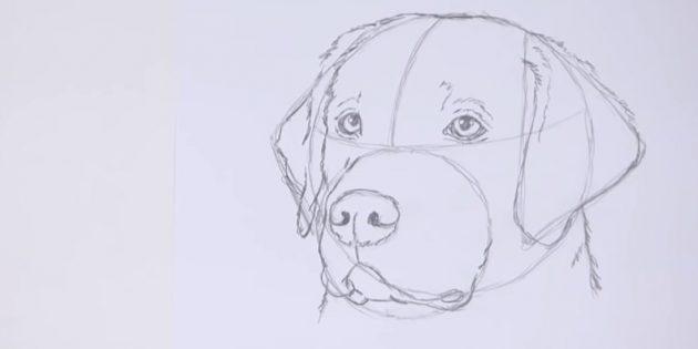 Очертите набросок левого уха и изобразите шёрстку на шее и голове