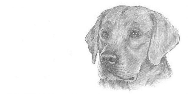 Как нарисовать реалистичную мордочку собаки