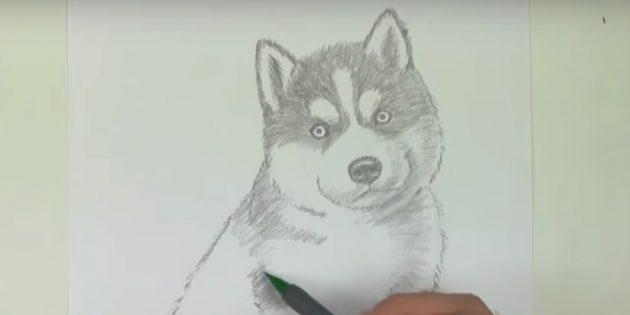 Обозначьте узор над глазами и заштрихуйте верхнюю часть собаки