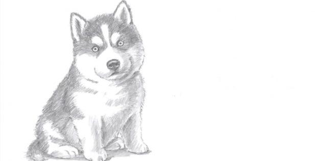 Как нарисовать сидящую собаку в реалистичном стиле