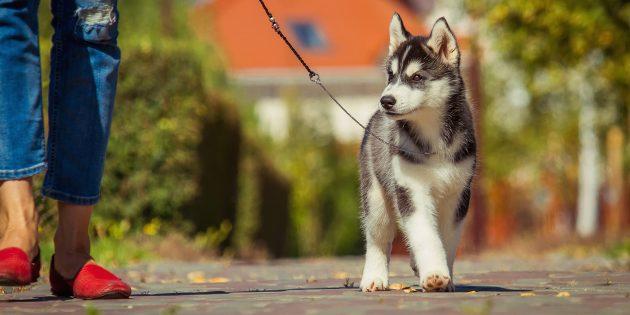 На прогулке собака должна идти рядом
