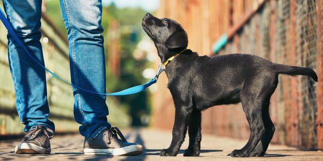 Как воспитать собаку: стоять