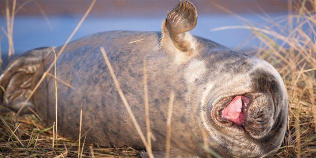 Самые смешные фото животных — хохот