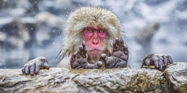 Самые смешные фото животных — обезьяна