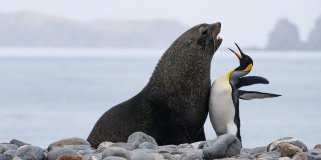 Самые смешные фото животных — звери бьются грудью
