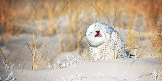 Самые смешные фото животных — сова