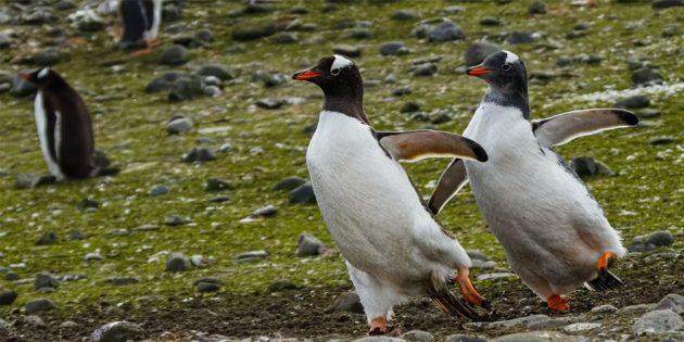 Самые смешные фото животных — танцующие птицы