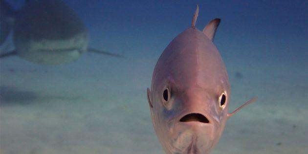 Самые смешные фото животных — рыба