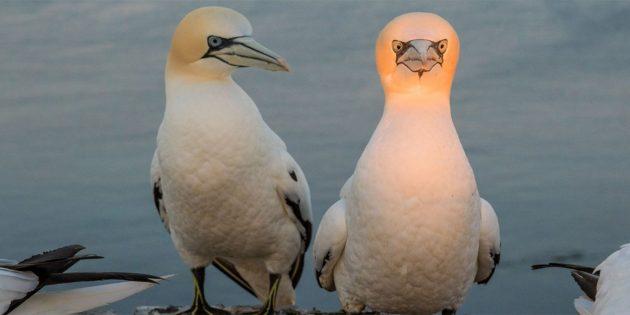 Самые смешные фото животных — птица со светящейся головой