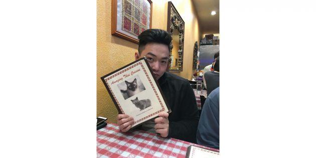 меню с котиками