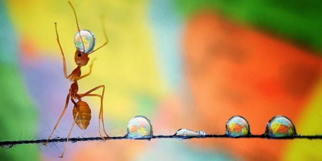 лучшие фото 2019: муравей с каплей воды