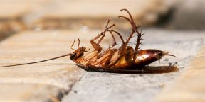 Лайфхак: самодельный спрей, который прогонит тараканов