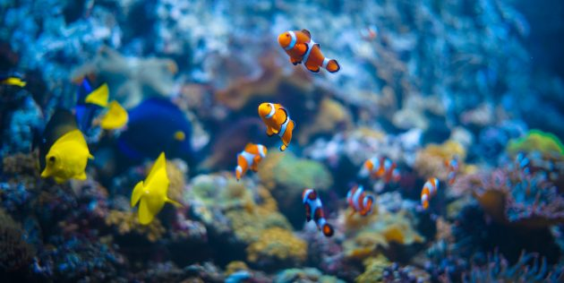 Как развлечь детей: сходите в аквариум