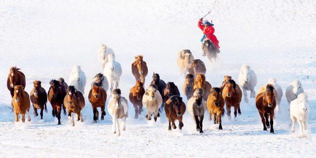 снежный всадник в Монголии.