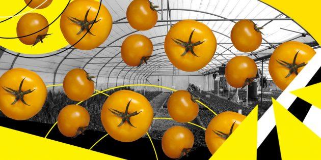 Идеи бизнеса с быстрой прибылью: агропроизводство