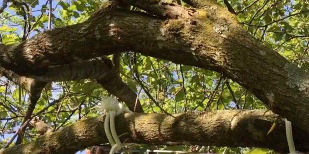 Закрепите верёвку на дереве