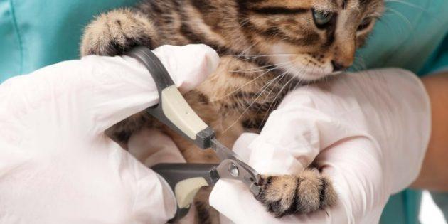Как приучить кошку и собаку к стрижке когтей