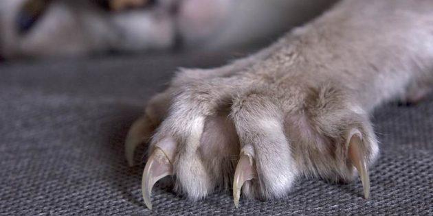 Зачем стричь когти кошке