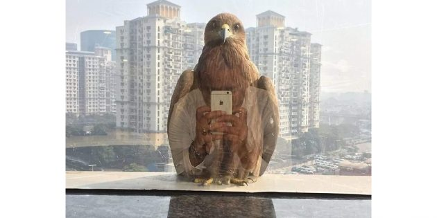 удивительные фото: птица со смартфоном