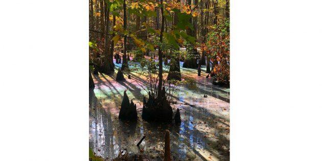 удивительные фото: радужное болото