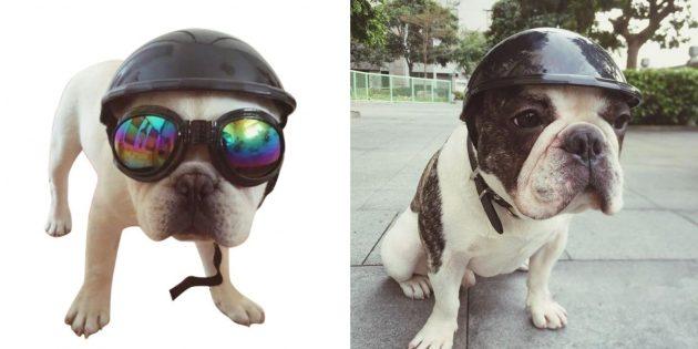 Шлем для собаки