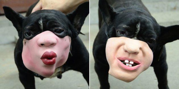 Собачья маска