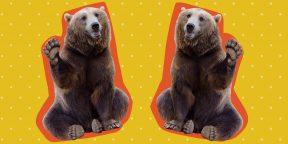 Правда ли медвежья желчь спасает от рака и гепатита