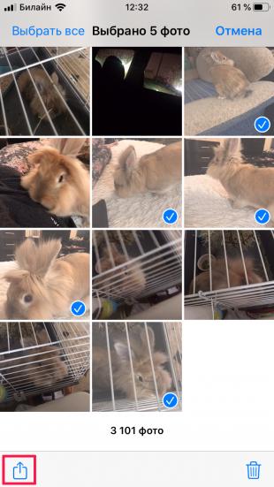 Лайфхак: в iOS 13 можно собрать несколько Live Photos в одно видео