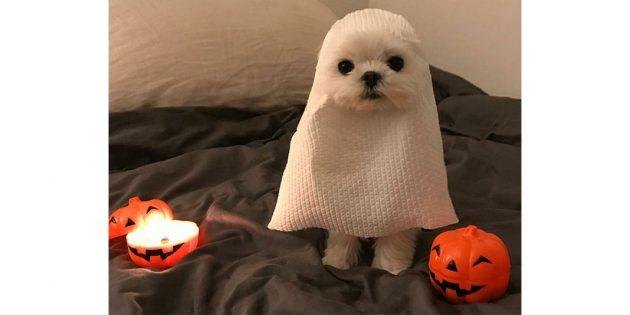 костюм Хеллоуин собака