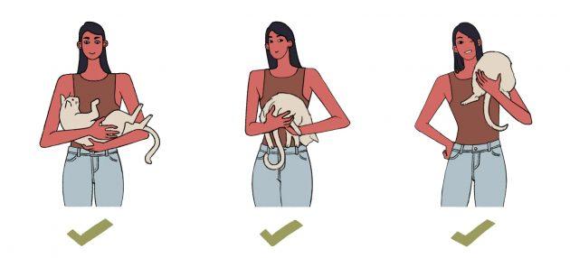 Как правильно держать кота: продвинутые способы
