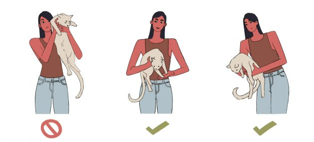 Как правильно держать кота: основные способы