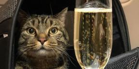 Как интернет отреагировал на сагу о толстом коте и «Аэрофлоте»