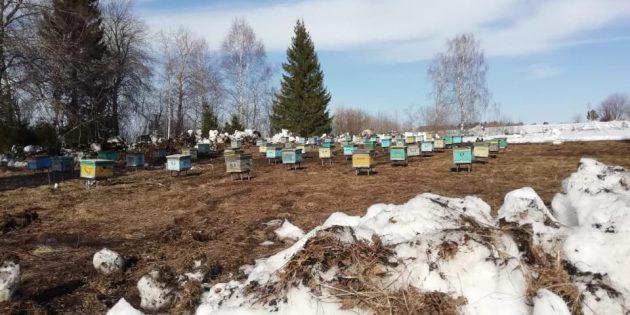 Мёд и общение с местными жителями